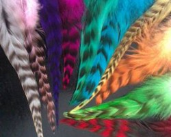 Hair-Feathers
